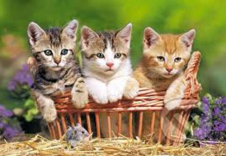 Mačička fotky
